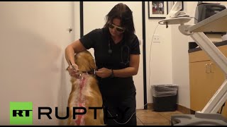 Usa: Laser Treatment Saves Dog After Brutal Acid Attack