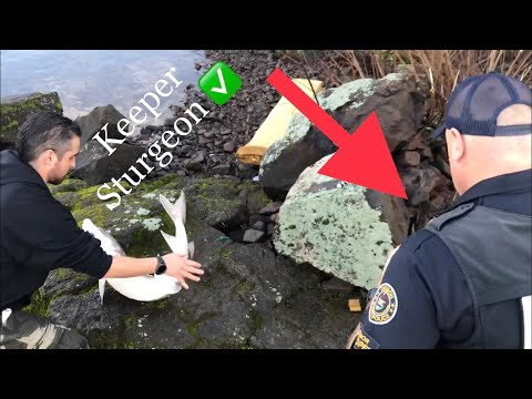 Keeper Sturgeon On The Columbia River!!! Cops Called(Must Watch)