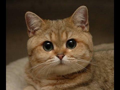 Кот пидрилы