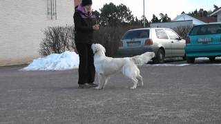Rhiva - Canine Freestyle Training