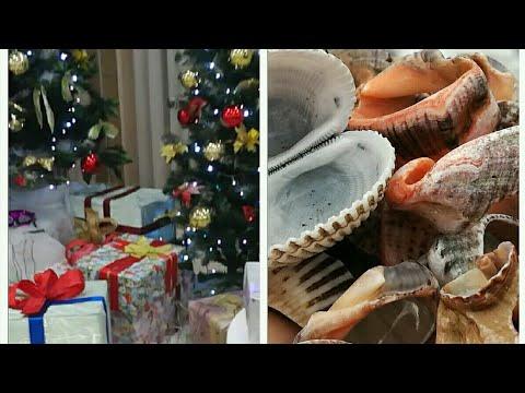 Отель Коралл, Адлеркурорт, новогодние каникулы 2019