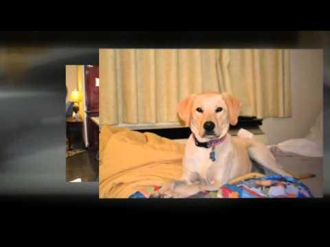 Pet Friendly Hotels   Charlottesville, Virginia
