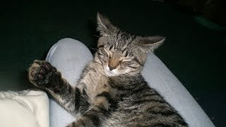 Xexe The Cat. Against Smoking {KingBullet}
