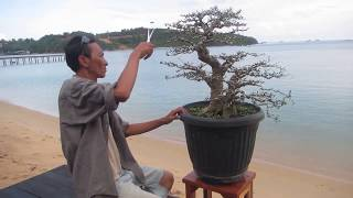 Trailer 1, Bonsai Adventure in SBS Resort Batam by Tedy Boy of Indonesia