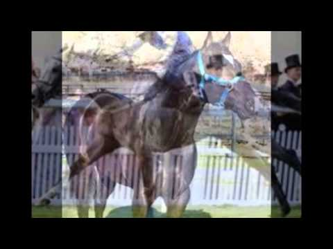 vitamin and mineral supplements for horses|Supreme Horse|(435)770-1167