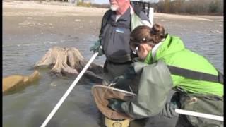Wildwood Dam Repairs & Fish