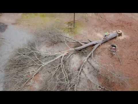 Red Oak Removal in Sheridan AR