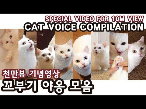 고양이 꼬부기 야옹 모음 - 천만뷰 기념영상 CAT MEOW VINES COMPILATION