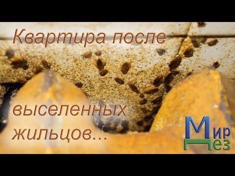 МирДез, уничтожение клопов, тараканов (2018г) 32
