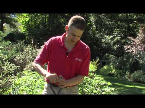 How to Reseed and Sod a Problem Lawn