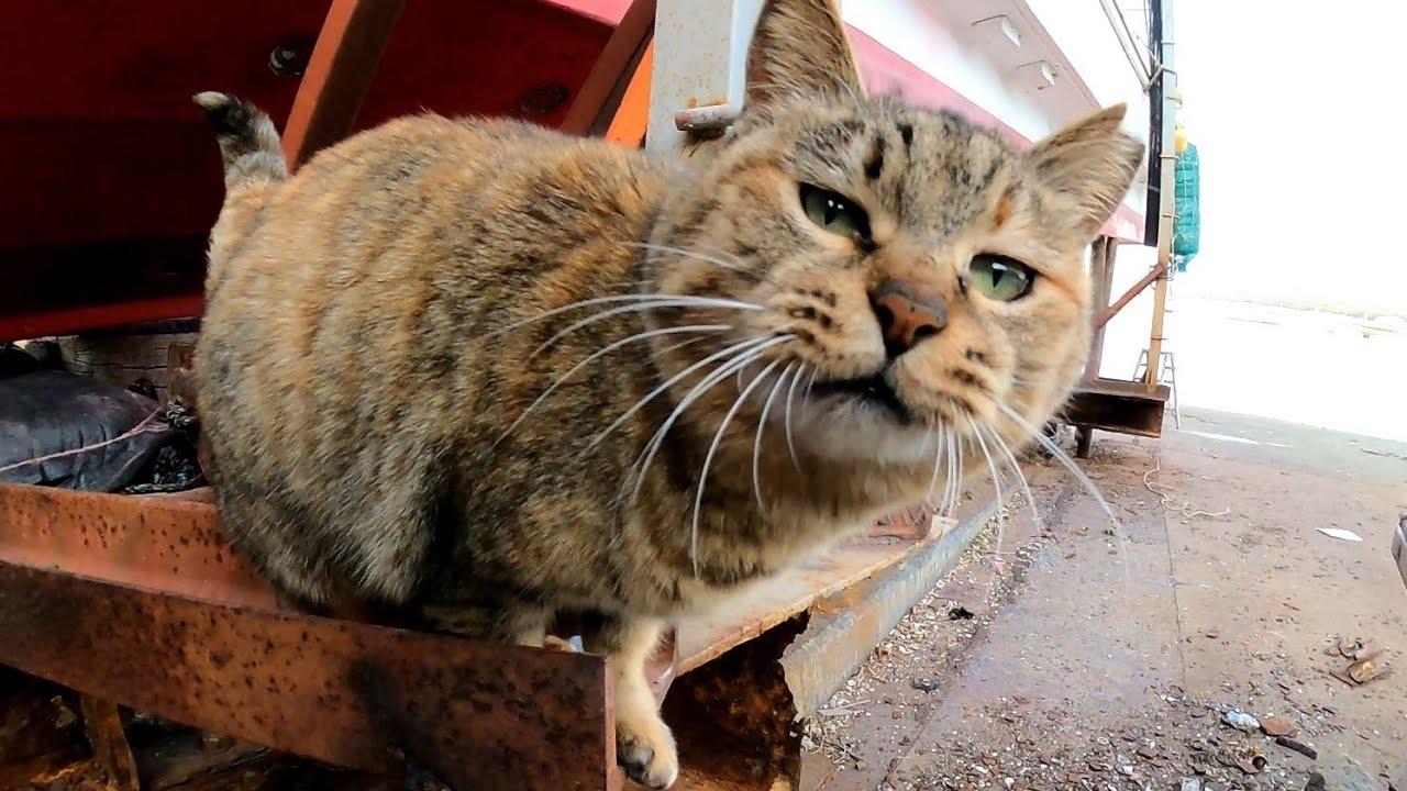漁港のサビ猫がカワイイ