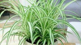 7 Coisas Sobre a Planta Gravatinha