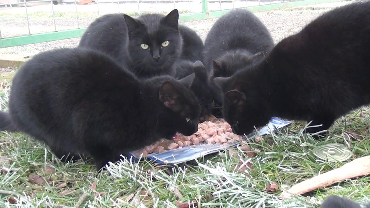 crna maca movs velika bradavica zreli porno