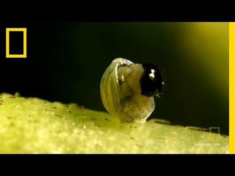 Watch a caterpillar become a butterfly