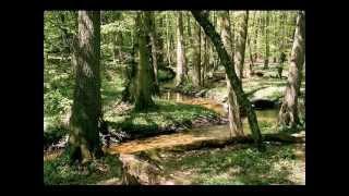 Zwierzęta leśne - zagadki dla dzieci cz.1
