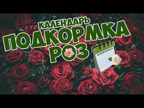 РОЗА Подкормка и уход 🥀 Календарь подкормки роз 🌹  сад огород с ХитсадТВ