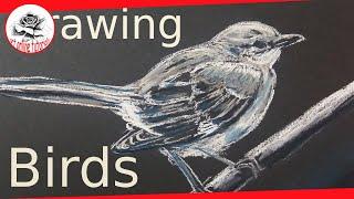 how to draw a mockingbird