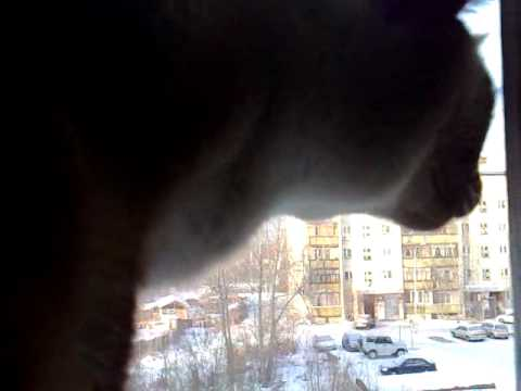 Кот и сигнализация