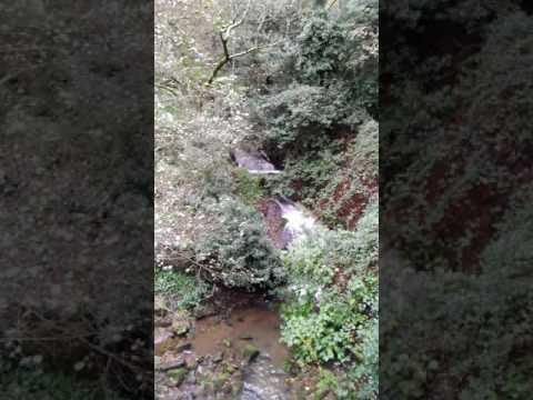 A Canção do Riacho de Favões na Quinta de Cortes 2016-11-20
