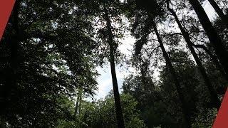10 միլիոն ծառ այս տարի․ իրատեսակա՞ն է արդյոք նպատակը