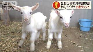 台風15号で被災した動植物園で出産ラッシュ 千葉(19/10/19)