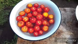 Консервируем помидоры в автоклаве
