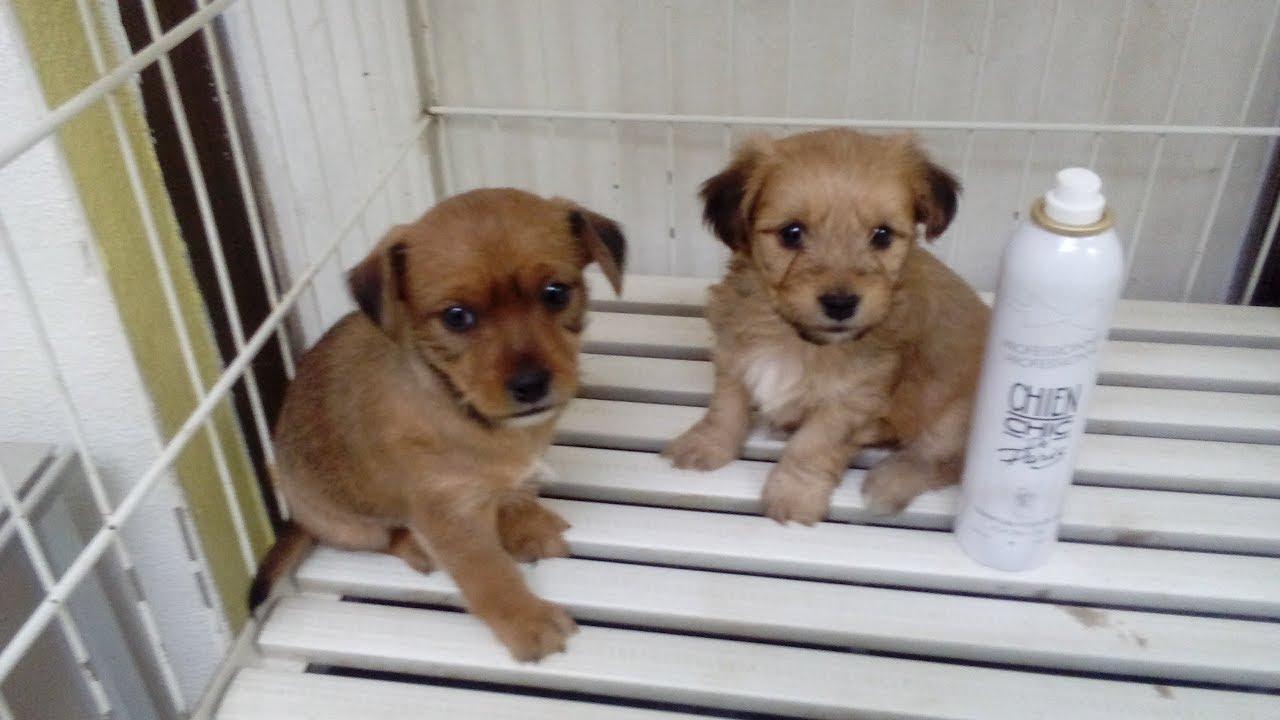 Perros Cachorros Raza Pequeña Adopta 618396258 Youtube