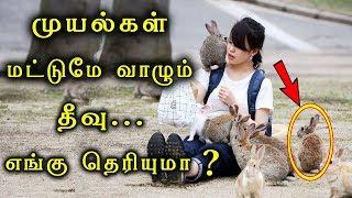 Video Amazing Rabbit Island in Tamil | Bunny Island In Tamil | Okunoshima Island Tamil download MP3, 3GP, MP4, WEBM, AVI, FLV Agustus 2018