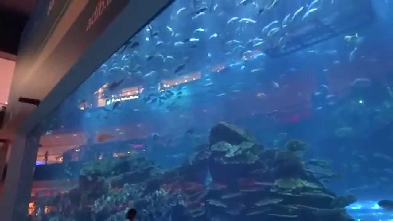 Aquarium Dubai Mall - YouTube