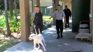 Deputies Learn To Catch Dogs With A Pole