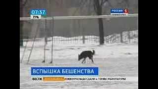Бешеная собака покусала 21 человека
