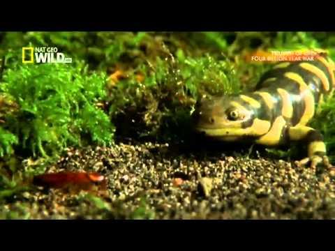 PBS Triumph of Life - The Four Billion Year War (Vietsub)