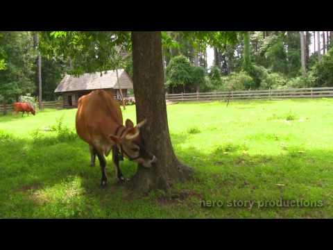 Vlog of Awesome - Island Farm in Manteo NC