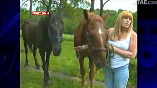 Tips Lead Humane Officers To Owner Of Starving Horses