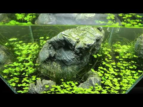 30cm cube aquascape for shrimp - YouTube