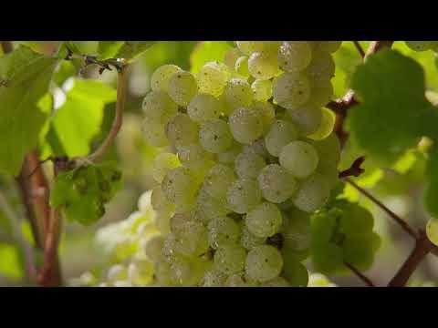 Rheingau – Wein und Genuss am Fluss