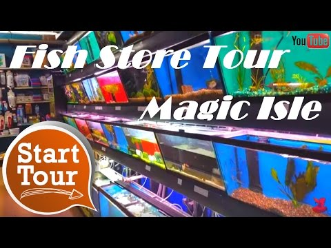 Local Fish Store Tour: Magic Isle