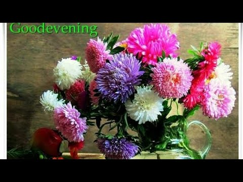 Good Evening Flowers Images Videos Hd Photo Download Pic