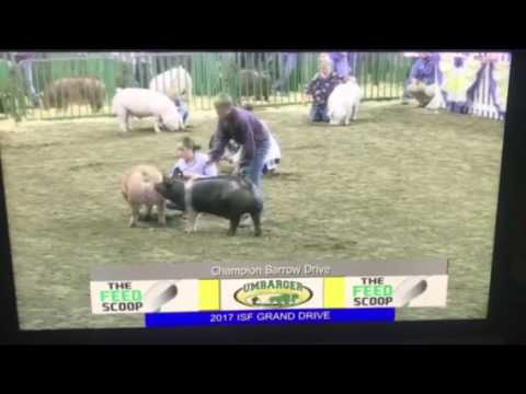 """""""This Livestock Showing Is Not A Hobby, It's A Way Of Life!"""""""