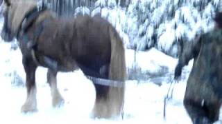 přibližování dřeva koňmi-Jasoň