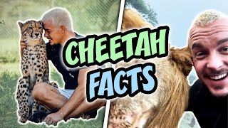 FACTS about Cheetahs 😍 How LIONS Clean 🤔 Dean Schneider Instagram Story