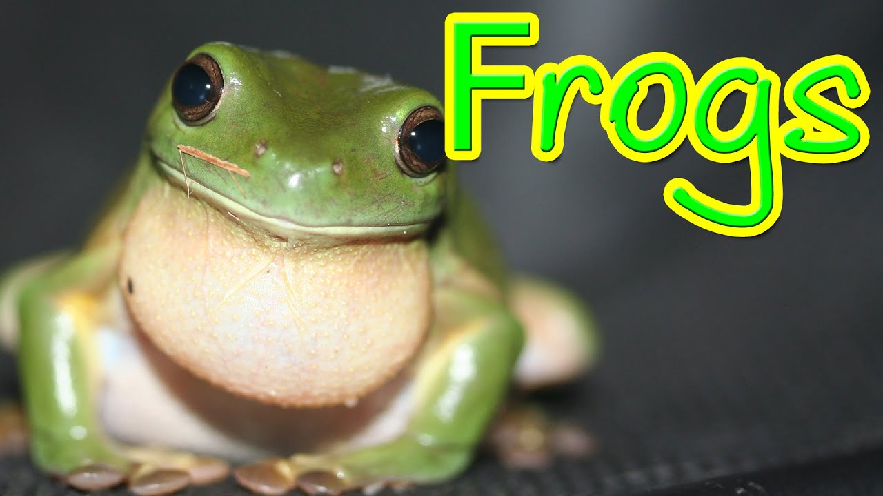 Hopping Frogs - A look at the amazing frog - YouTube