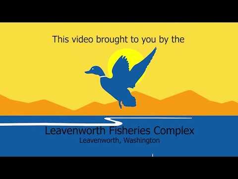 LNFH Tour Series Part 1: Introduction To The Leavenworth National Fish Hatchery