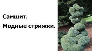 Фигурная стрижка деревьев и кустов: фото, видео