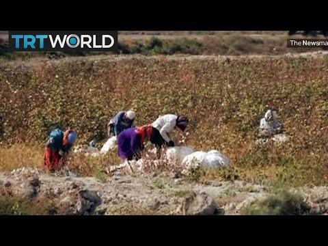 Uzbekistan's cotton industry