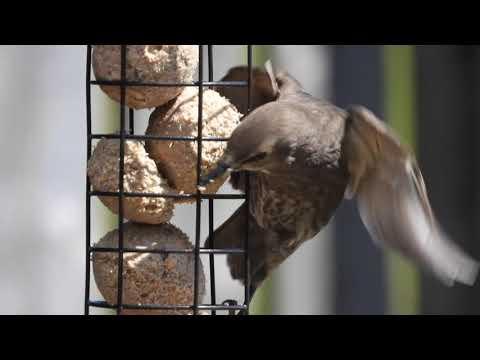 Feed The Birds 01/07/2019