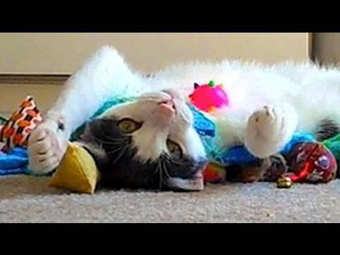 Mean Kitty - Toys! Toys! Toys!  8.20.09