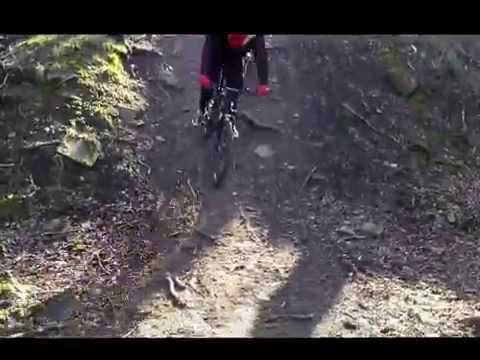 Calverley Woods falls