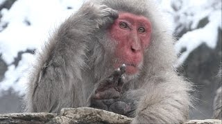 【SNOW MONKEY】ニホンザル / 地獄谷野猿公苑 2017 Great Mom ☆Tokkuri 00☆ 8 / In a hot spring