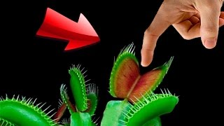 EXPERIMENT - Fleischfressende Pflanze VS Wurstfinger | Was passiert?